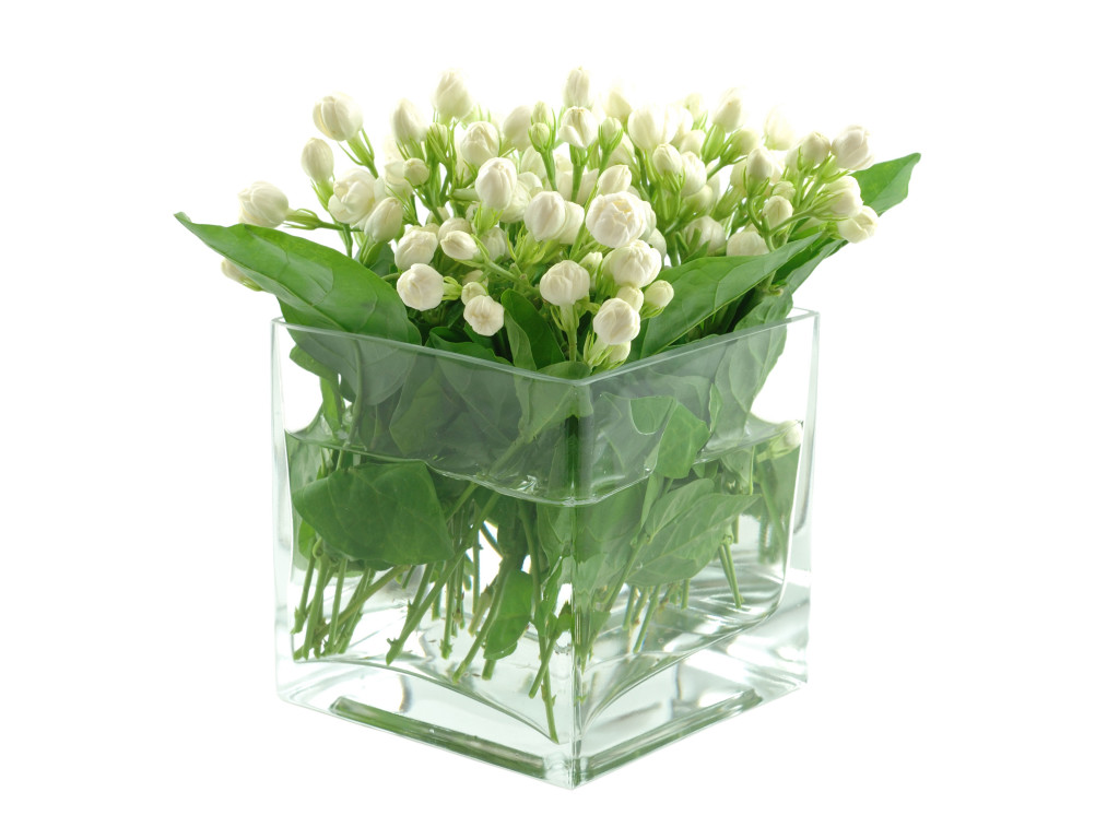 Jasmine-flower-in-glass-box